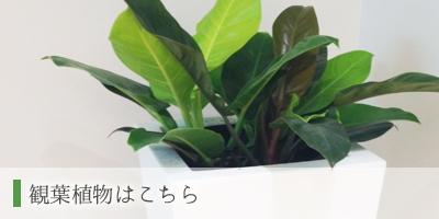 観葉植物_花好ギフトフラワーズ